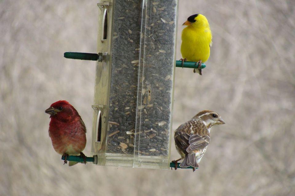 La couleur des oiseaux au printemps les quatre saisons for Oiseau par la couleur