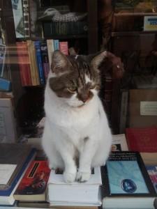 Le chat du libraire