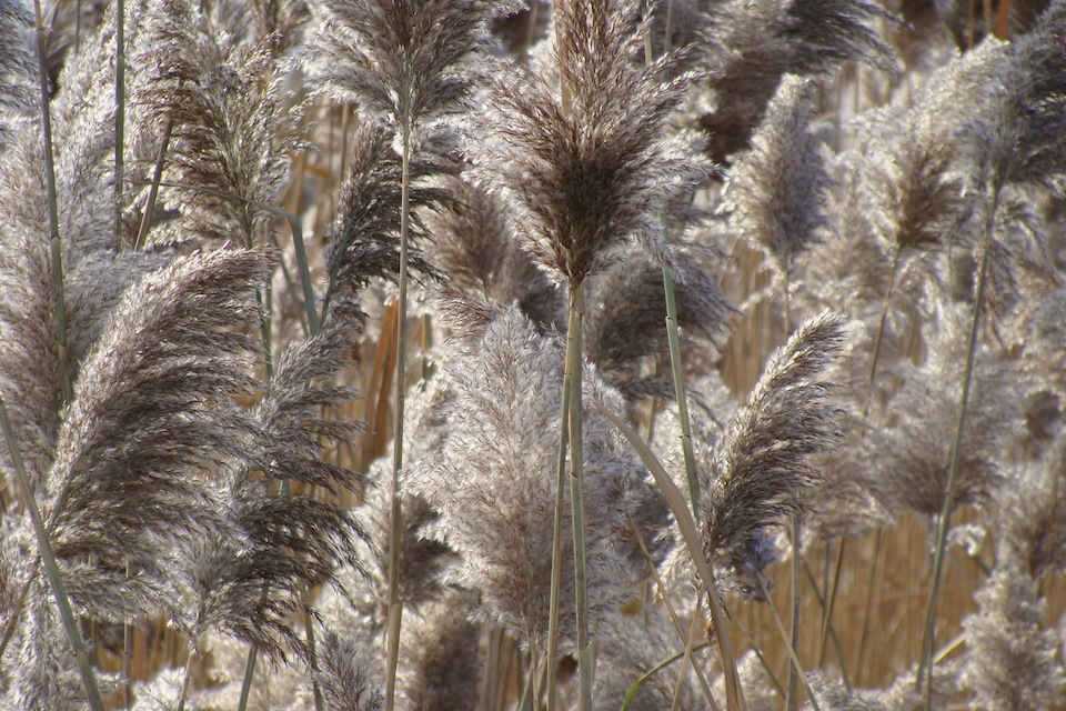 """roseau chat """"le chêne et le roseau"""" de jean de la fontaine – audio this fable tells a great story about a reed (which represent the people) and an all-mighty oak."""