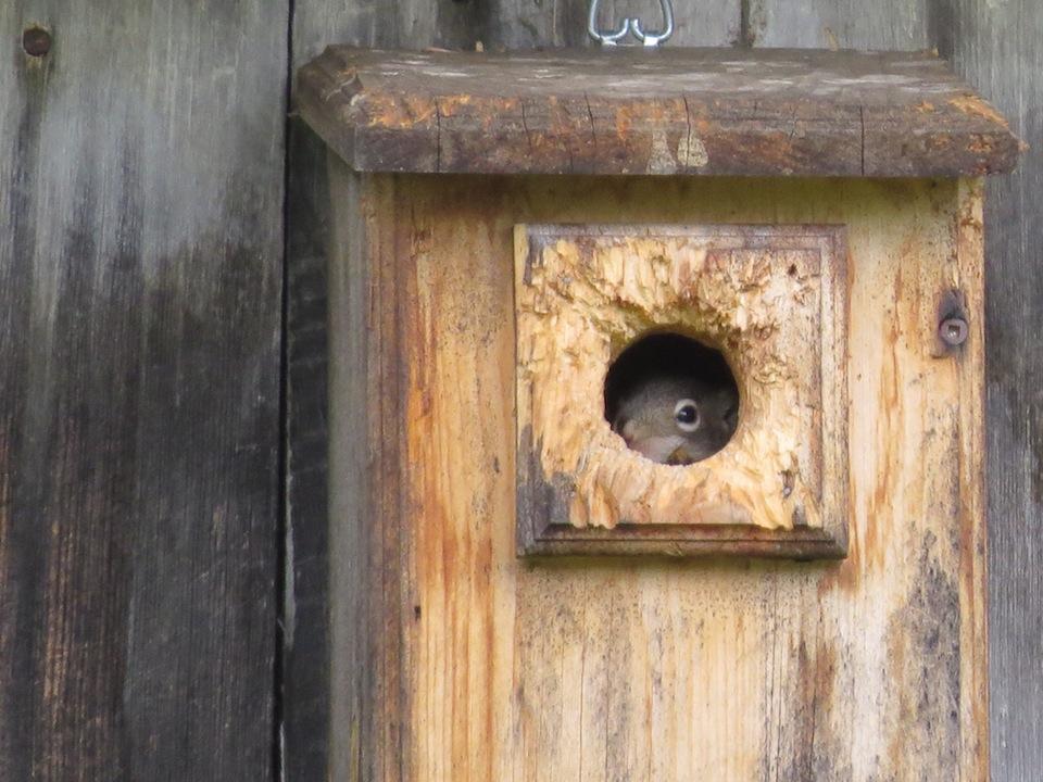 Un nouvel espoir mais pour des oiseaux cette fois ci - Combien de litre de peinture par m2 ...
