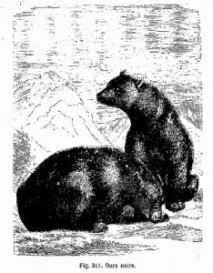 deux ours noirs