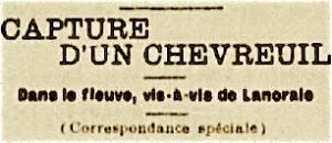 capture chevreuil