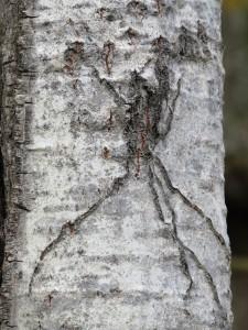 araignee