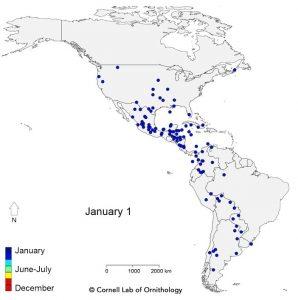carte migration oiseaux