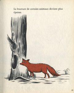 p-19-le-renard