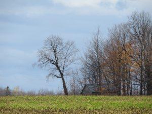 arbre-de-la-route-moreau