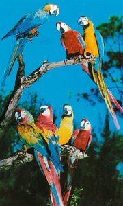 perroquets-multicolores