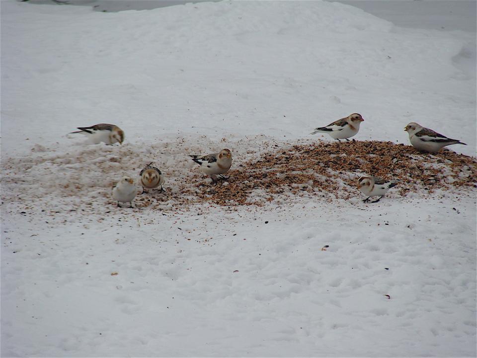 Les petits oiseaux blancs les quatre saisons for Les petits oiseaux