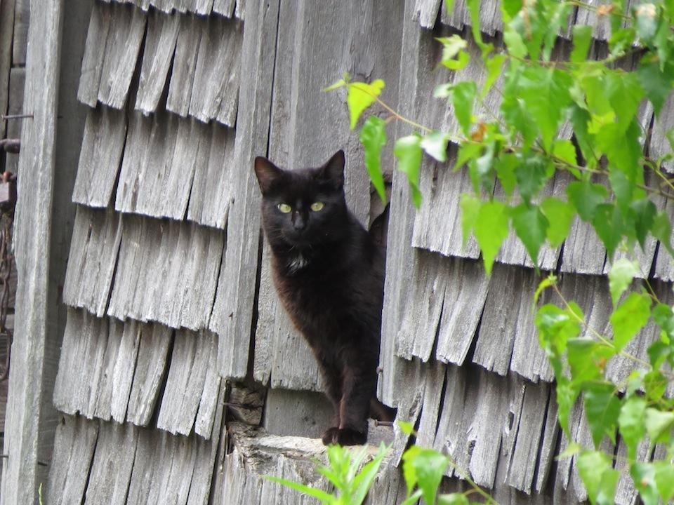 village noir chatte le roi lion Cartoon porno
