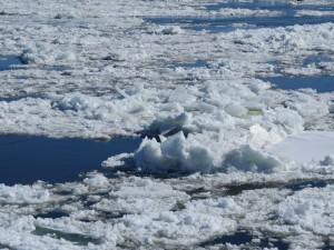 glacesurlefleuve
