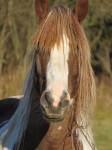 cheval deux