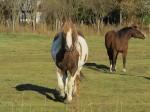 chevaux deux