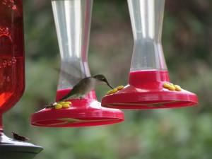 colibri un
