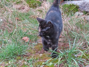 jeune chatte noire un