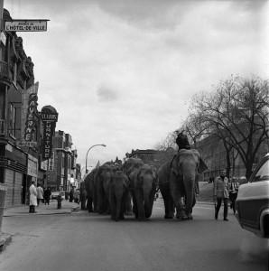 elephant defilant a montreal