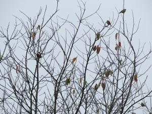 estce oiseaux estce feuilles
