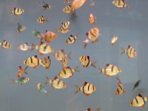 poissons deux