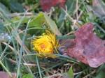 fleur jaune deux
