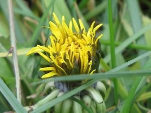 fleur un