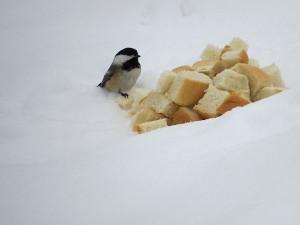 la mesange et la pain un