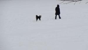 marcheuse chien