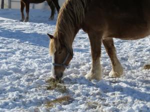 cheval un