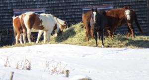 chevaux un