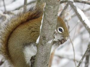 vaut mieux me taire silence ecureuil ne dire mots