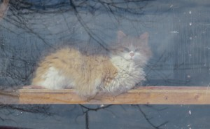 coquin chat raminagrobis
