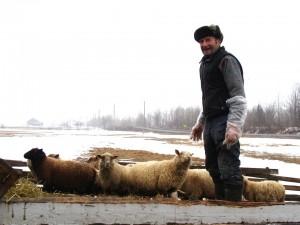 jean paul labonte avec ses moutons