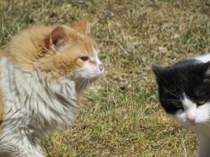 deux minous deux chats coquin et minette