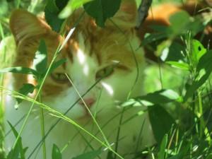le chat visage de chat Cacaouette