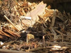 papillon dans les residus