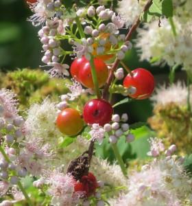 bouquet amour cerises spiree