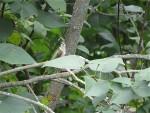 colibri deux