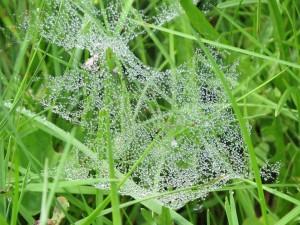 perles sur toile araignee