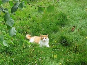 le chat Gaspard