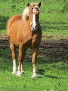 cheval de labonte deux