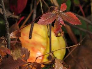 Colette automne