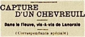 capture chevreuil