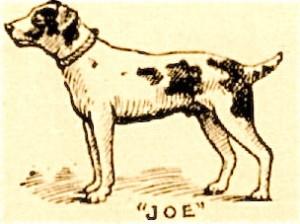 le chien Joe