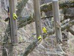 Quinze oiseaux
