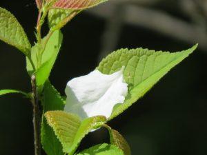 Un petale depose tendresse