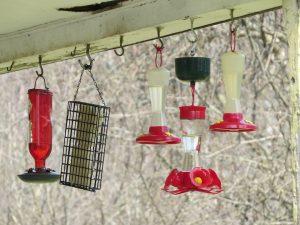 abreuvoirs a colibris