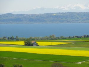 champ de colza en suisse