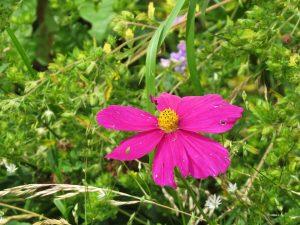 Fleur etrange un