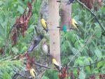 Oiseaux sous la pluie