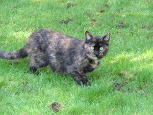chat de Luc