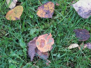 feuilles-tombees-rassemblees
