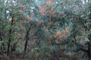 foret-automne